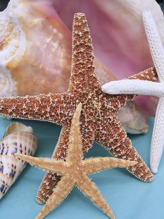 Dried Sea Stars Leaning on Shell