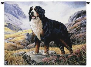 Bernese Mountain Dog by Robert May