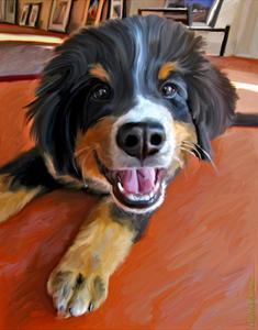 Bernese Puppy by Robert Mcclintock