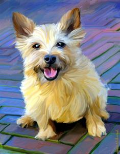 Cairn Terrier by Robert Mcclintock