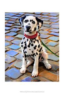 Dalmatian Puppy by Robert Mcclintock