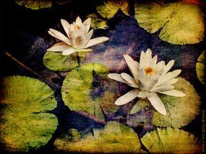 Lily Ponds V by Robert Mcclintock
