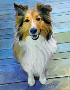 Sheltie the Eyes Have it by Robert Mcclintock