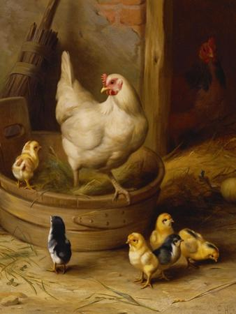 A White Sussex and a Buff Sussex with Chicks by Robert Morley