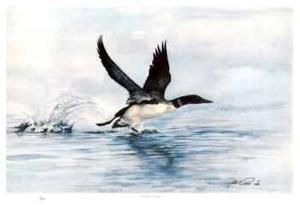 Common Loon by Robert Pow