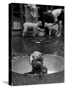 Dog Being Bathed in Back Yard by Robert W. Kelley