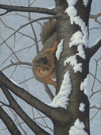 What's Going on - Fox Squirrel