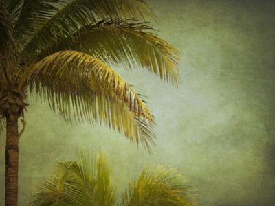Coconut Palms by Roberta Murray