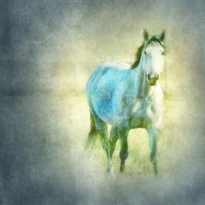 Dapple Grey by Roberta Murray