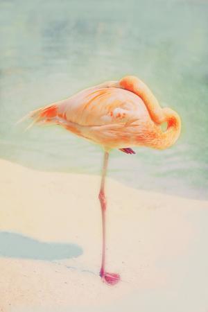 Resting Flamingo