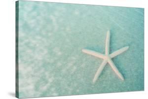 Starfish II by Roberta Murray