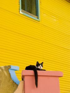 Cat Resting on Pillar Next to Yellow Wall, Barrio La Boca by Roberto Gerometta
