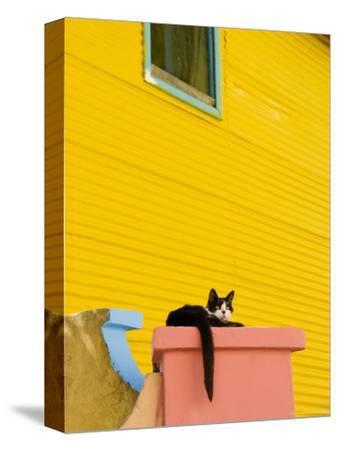 Cat Resting on Pillar Next to Yellow Wall, Barrio La Boca