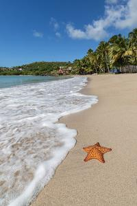 A Starfish Transported by Waves Lying Motionless on Carlisle Bay by Roberto Moiola