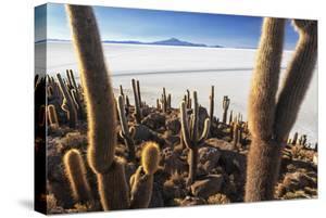 Cacti, Isla Incahuasi, a Unique Outcrop in the Middle of the Salar De Uyuni, Oruro, Bolivia by Roberto Moiola
