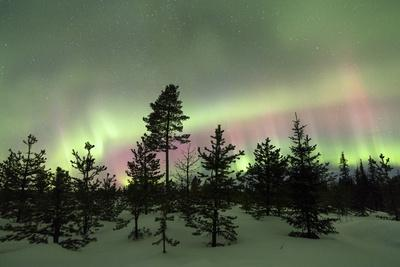 Colorful lights of the Northern Lights (Aurora Borealis) and starry sky on the snowy woods, Levi, S
