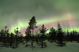 Colorful lights of the Northern Lights (Aurora Borealis) and starry sky on the snowy woods, Levi, S by Roberto Moiola