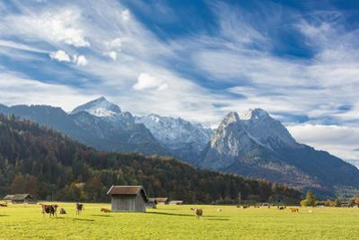 Cows in the green pastures framed by the high peaks of the Alps, Garmisch Partenkirchen, Upper Bava by Roberto Moiola