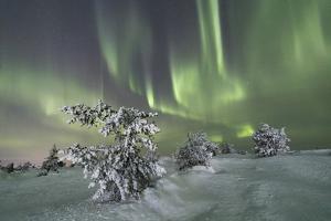 Northern Lights (Aurora Borealis) on the frozen trees in the snowy woods, Levi, Sirkka, Kittila, La by Roberto Moiola