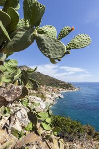 Prickly pears on rocks above the sea, Pomonte, Marciana, Elba Island, Livorno Province, Tuscany, It by Roberto Moiola