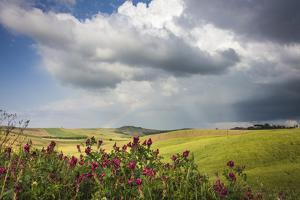 Red flowers and rainbow frame the green hills and farmland of Crete Senesi (Senese Clays), Province by Roberto Moiola