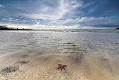 Sea Star in the Clear Water of the Fine Sandy Beach, Skagsanden, Ramberg by Roberto Moiola