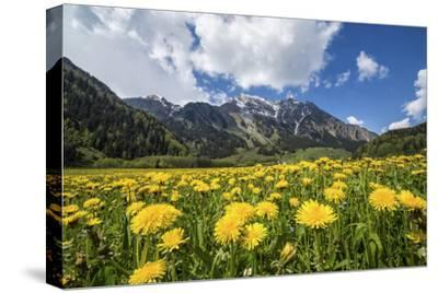 Spring Flowers and Green Meadows, Bregaglia Valley, Engadine