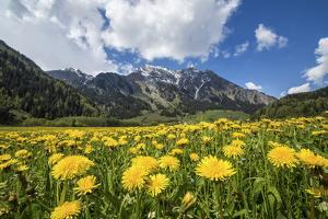 Spring Flowers and Green Meadows, Bregaglia Valley, Engadine by Roberto Moiola