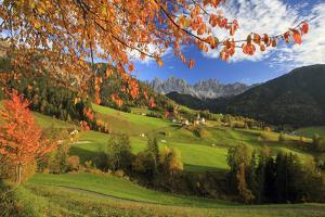 The Autumn Colors of a Tree Overlooking Val Di Funes and St. Magdalena Village by Roberto Moiola