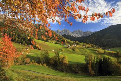 The Autumn Colors of a Tree Overlooking Val Di Funes and St. Magdalena Village