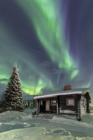 The Northern Lights (Aurora borealis) frame the wooden hut in the snowy woods, Pallas, Yllastunturi