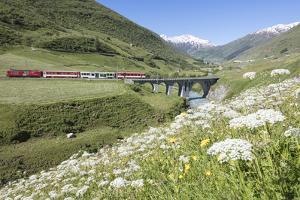 Typical red Swiss train on Hospental Viadukt surrounded by creek and blooming flowers, Andermatt, C by Roberto Moiola