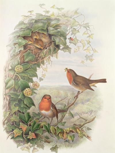 Robin, 1873-John Gould-Giclee Print
