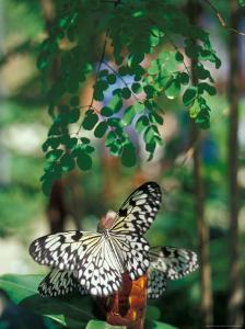 Butterfly Farm on St. Martin, Caribbean by Robin Hill