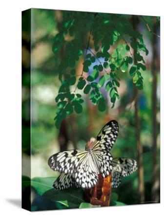 Butterfly Farm on St. Martin, Caribbean