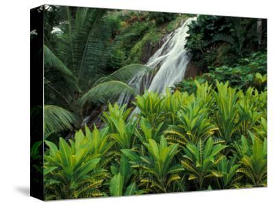 Shaw Park Gardens, Jamaica, Caribbean