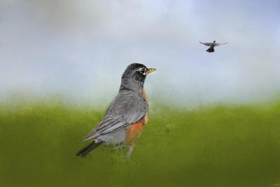 Robin in the Field-Jai Johnson-Giclee Print