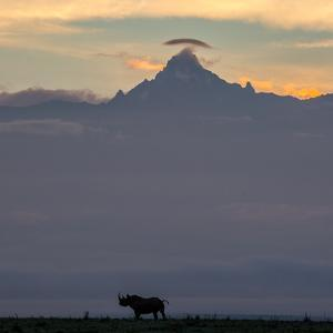 A black rhino silhouetted against Mount Kenya at dusk. by Robin Moore