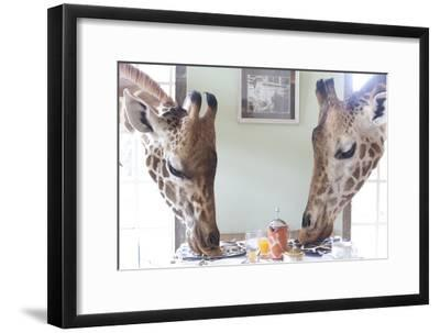 Two Giraffes Have Breakfast at Giraffe Manor in Nairobi, Kenya