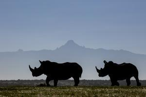 Two white rhinos silhouetted against the outline of Mount Kenya on a clear morning. by Robin Moore