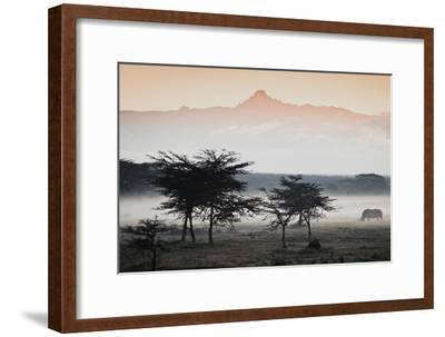 White Rhinos Appear Out of the Mist in Front of Mount Kenya