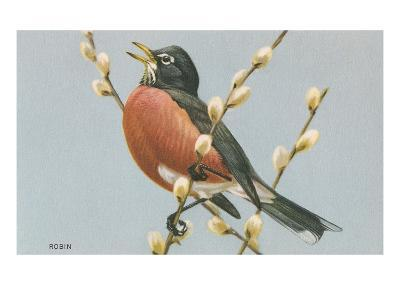 Robin on Pussy Willows--Art Print