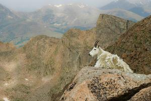 Rocky Mountain Goat by Robin Wilson Photography