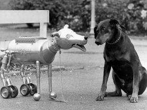 Robot Dog Meets a Real Doberman Dog