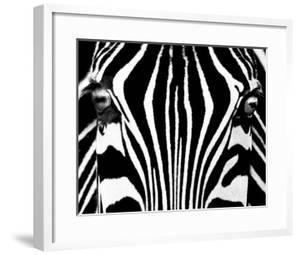 Black & White I (Zebra) by Rocco Sette