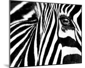 Black & White II (Zebra) by Rocco Sette