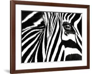 Black & White II (Zebra) by Rocco Sette