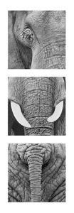 Elephant Tryptich by Rocco Sette