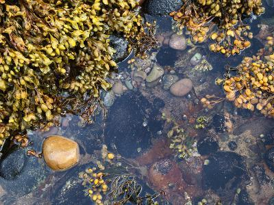 Rock Pool at Catterline, Aberdeenshire, Scotland, United Kingdom, Europe-Mark Sunderland-Photographic Print