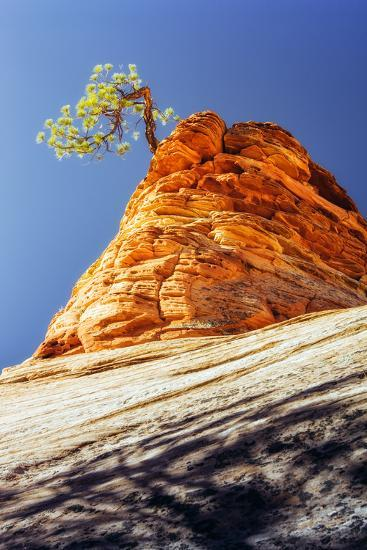 Rock Tree, Checkerboard Mesa, Zion National Park Utah-Vincent James-Photographic Print